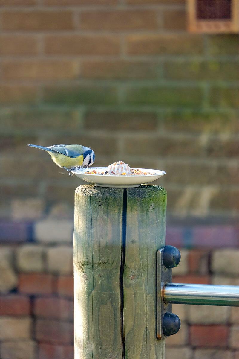 Vogelvoertaartje met vogeltje1.jpg