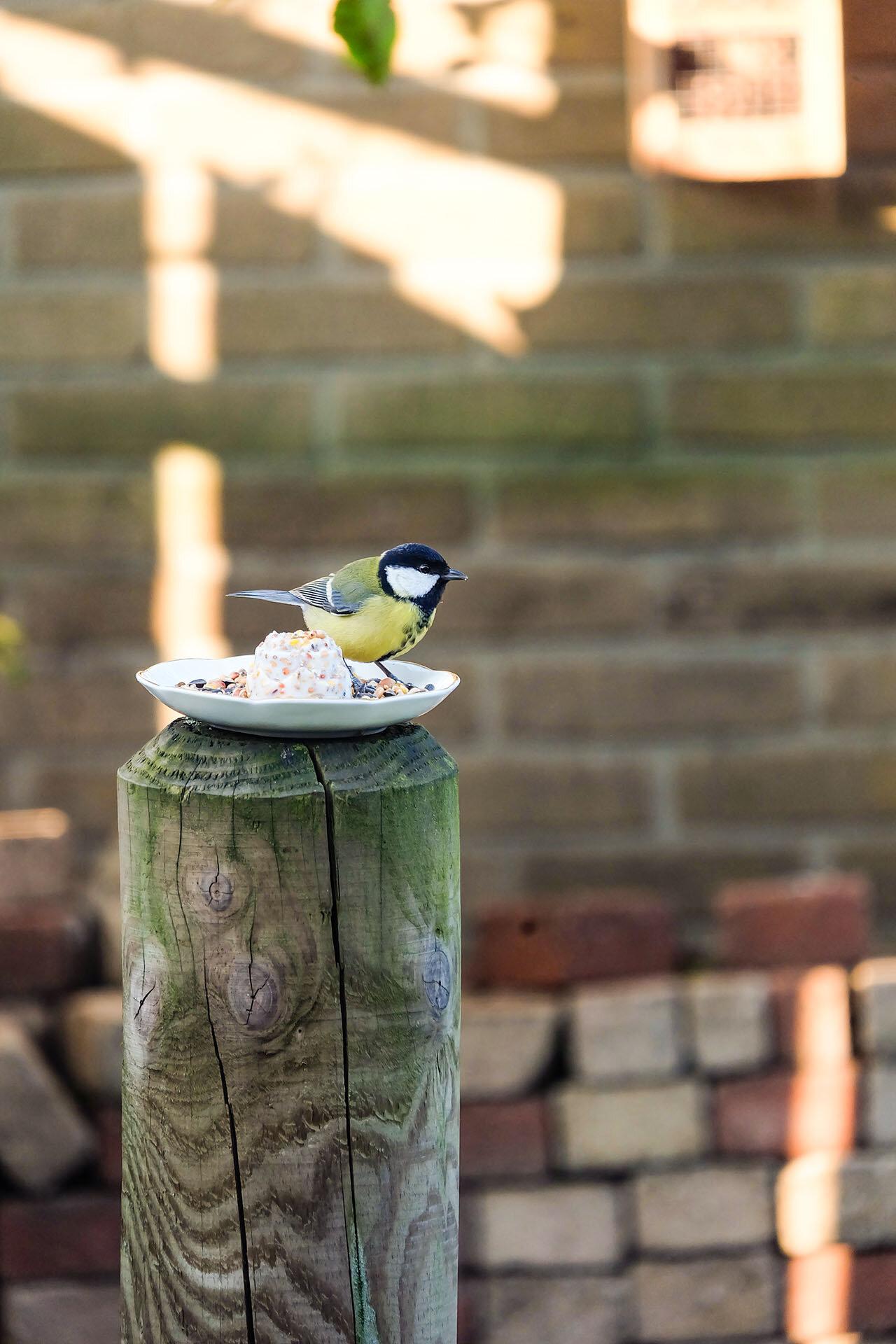 Vogelvoertaartje buiten4.jpg