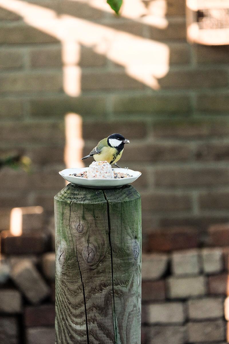 Vogelvoertaartje met vogeltje2.jpg