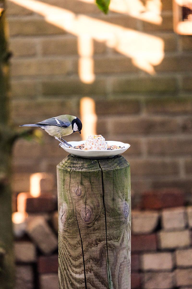Vogelvoertaartje met vogeltje3.jpg