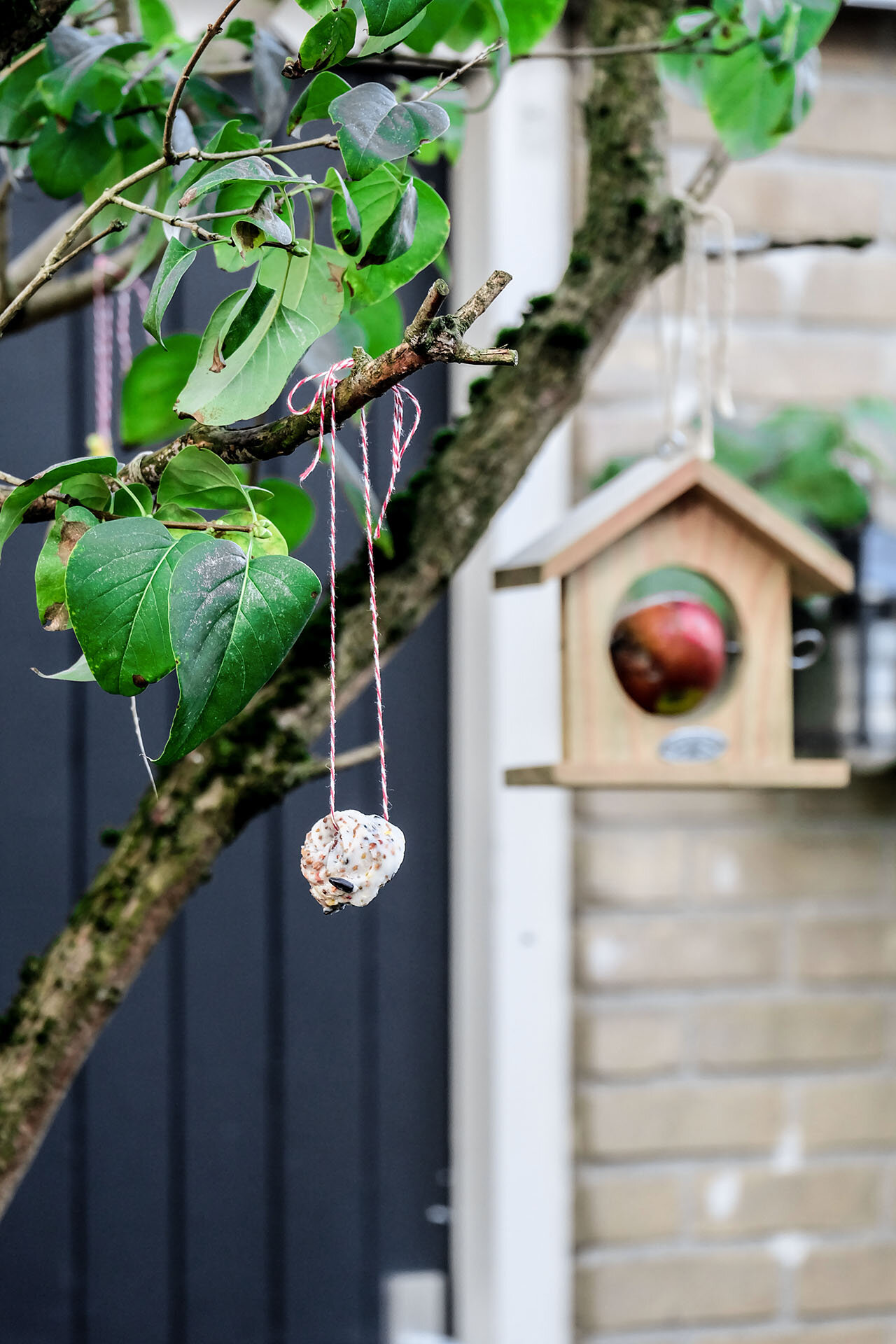 Vogelvoerhanger opgehangen1.jpg