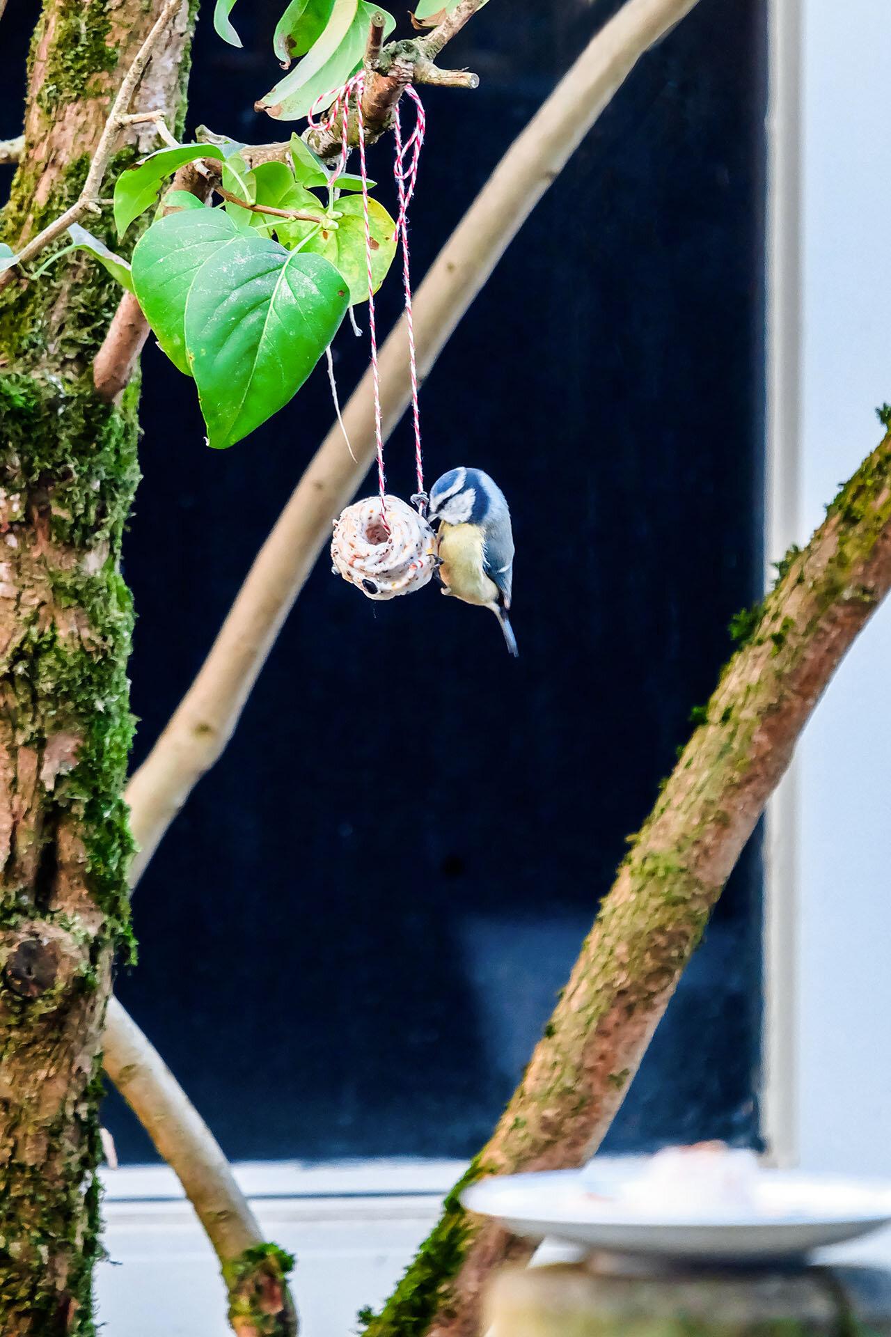 Vogel aan taartje.jpg