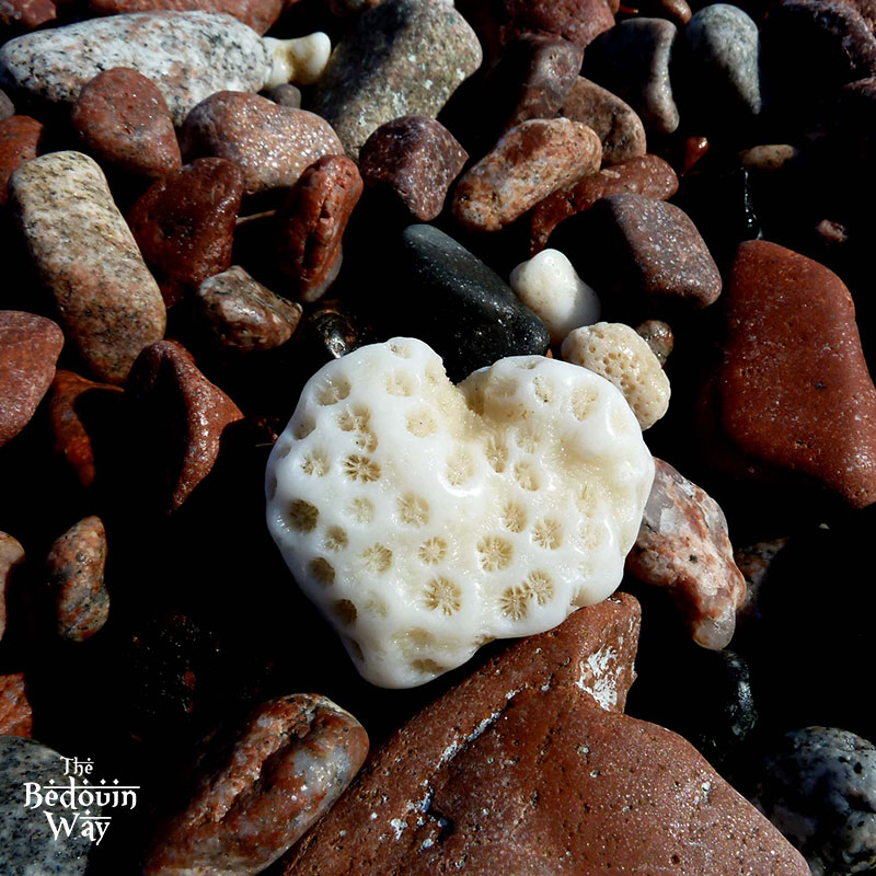 love-heart-shaped-coral