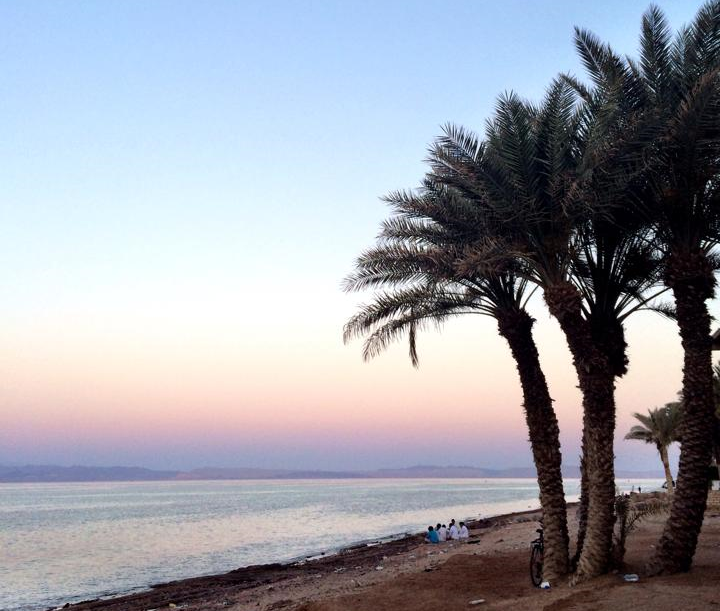 Palm trees in Dahab South Sinai