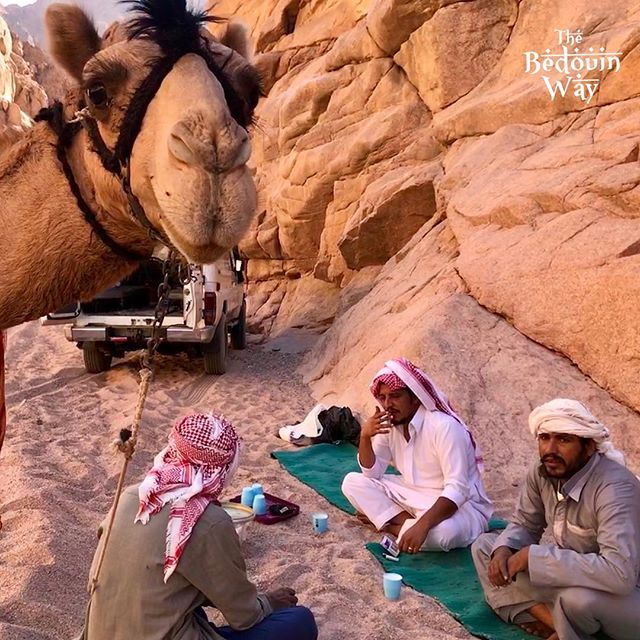 The camel take selfie with the Bedouin 😂 #camel #bedouin #sinai #southsinai #wadikid #egypt #desert #tea #thebedouinway #selfie #selfiesunday