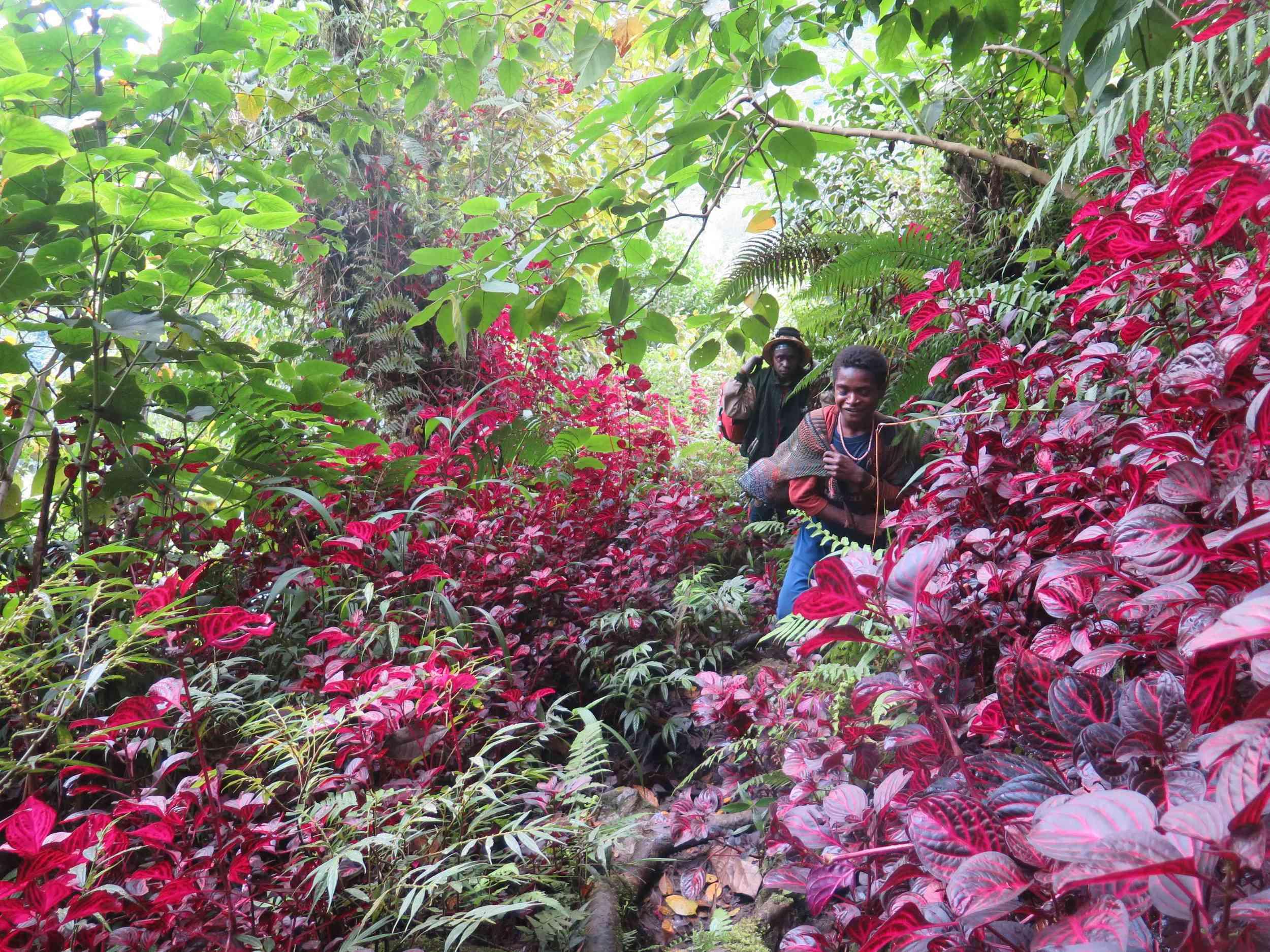 Ormanda yuruyusun baslangici / Start of our trek in the jungle