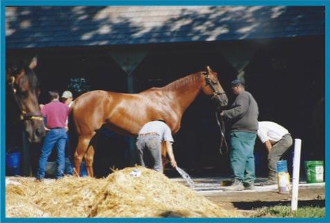 Woody horse 2.jpg