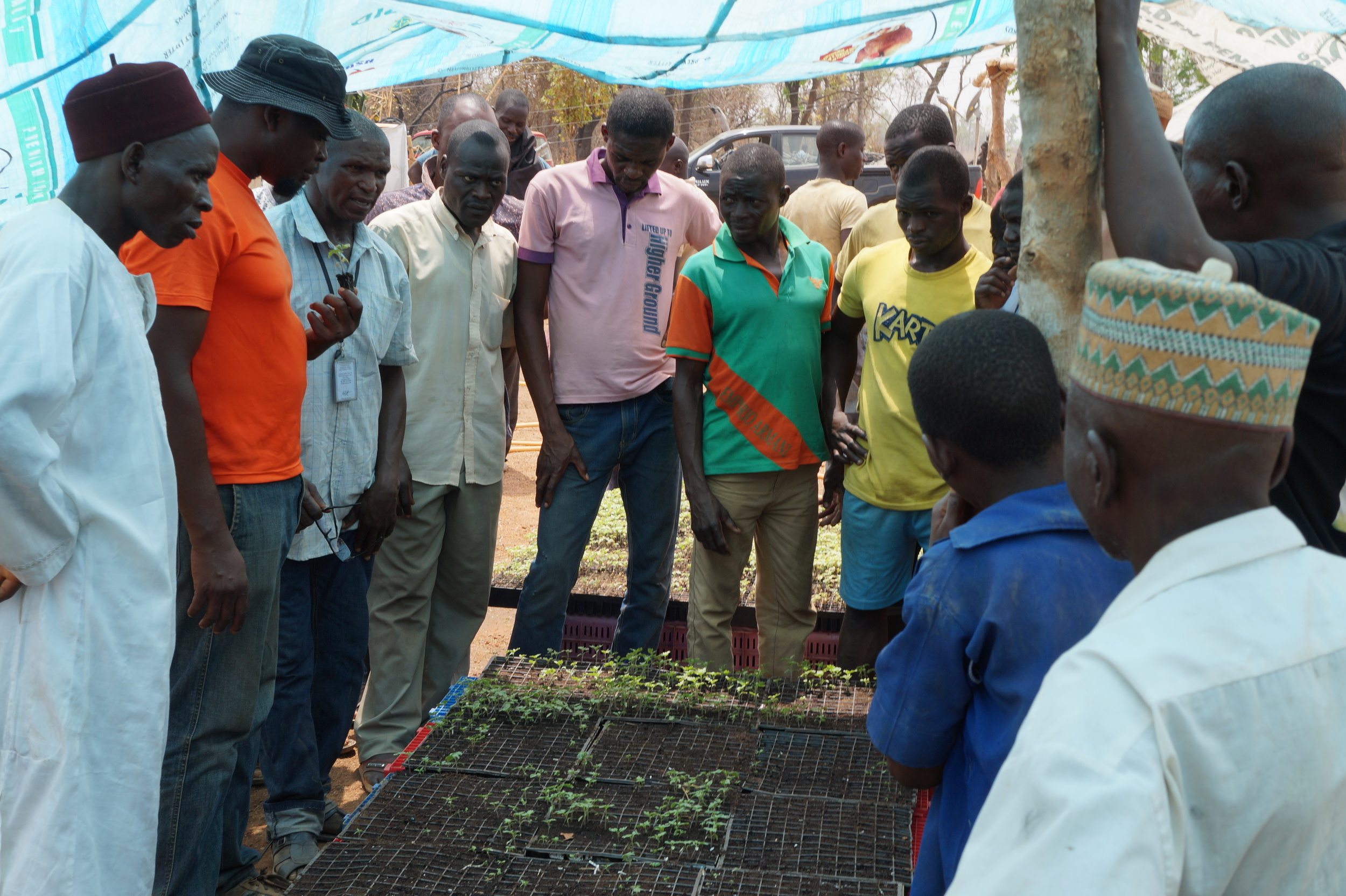 #TomatoTalk: Seedlings 101 with Chibuzo and Bala