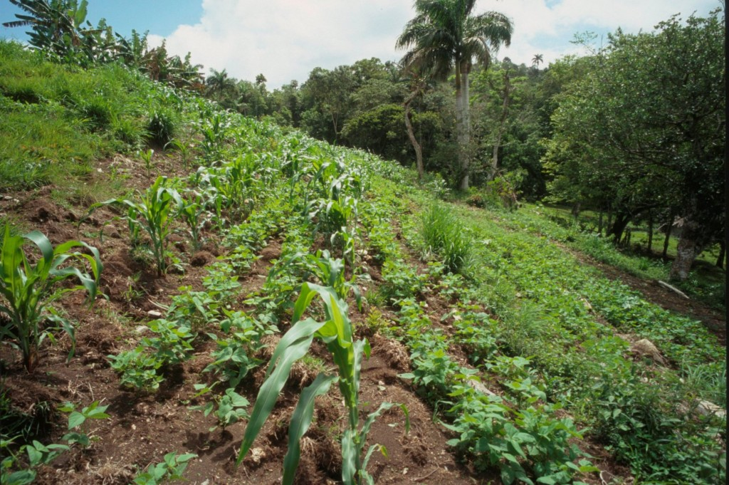 In the rainy season, farmers will make use every patch of land they can find!