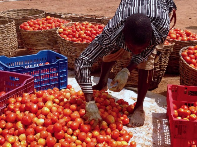 Addressing human needs at the base of the economic pyramid. Tomato Jos hopes to help improve farmers' practices and sales, to boost their incomes.