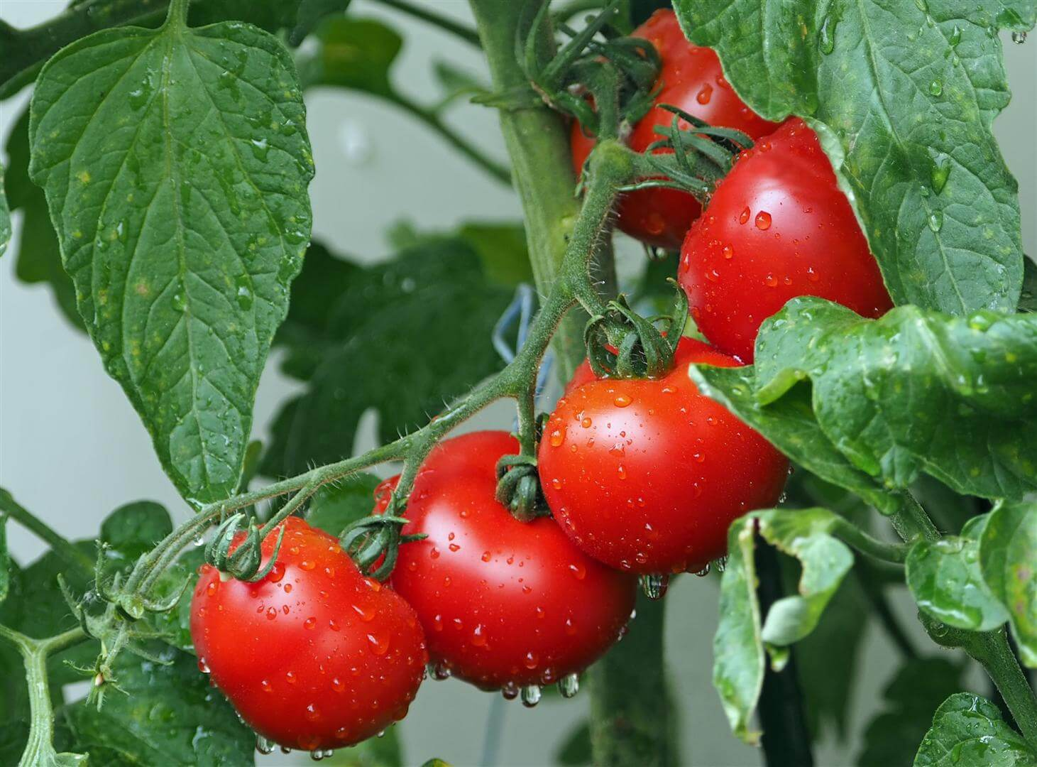 Tomato Jos: The Beginning of a Farming Success Story.