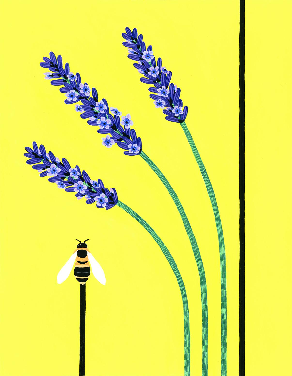 LavenderLoRes.jpg