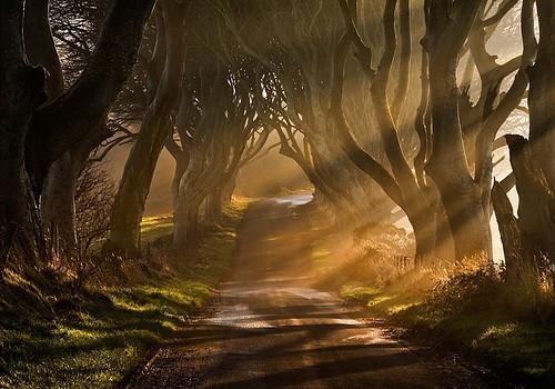 a-path-fog-forest-green-landscape-light-Favim.com-40638.jpg