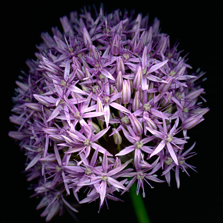 Purple Globe.jpg