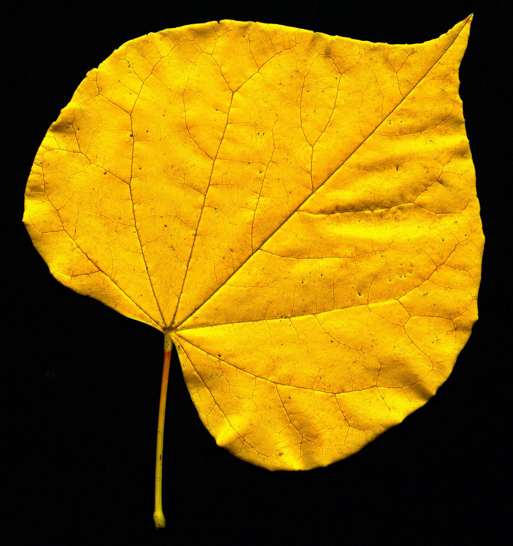 Yellow Heart.jpg