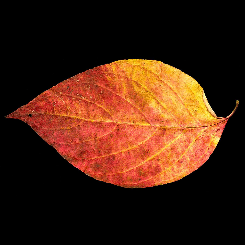 OrangeScan002.jpg