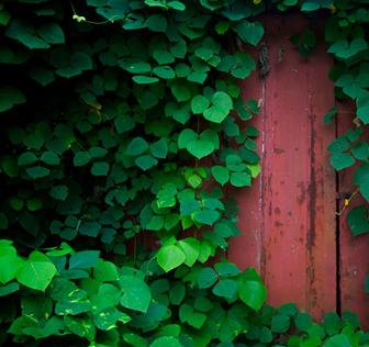 hp_door_sm.jpg