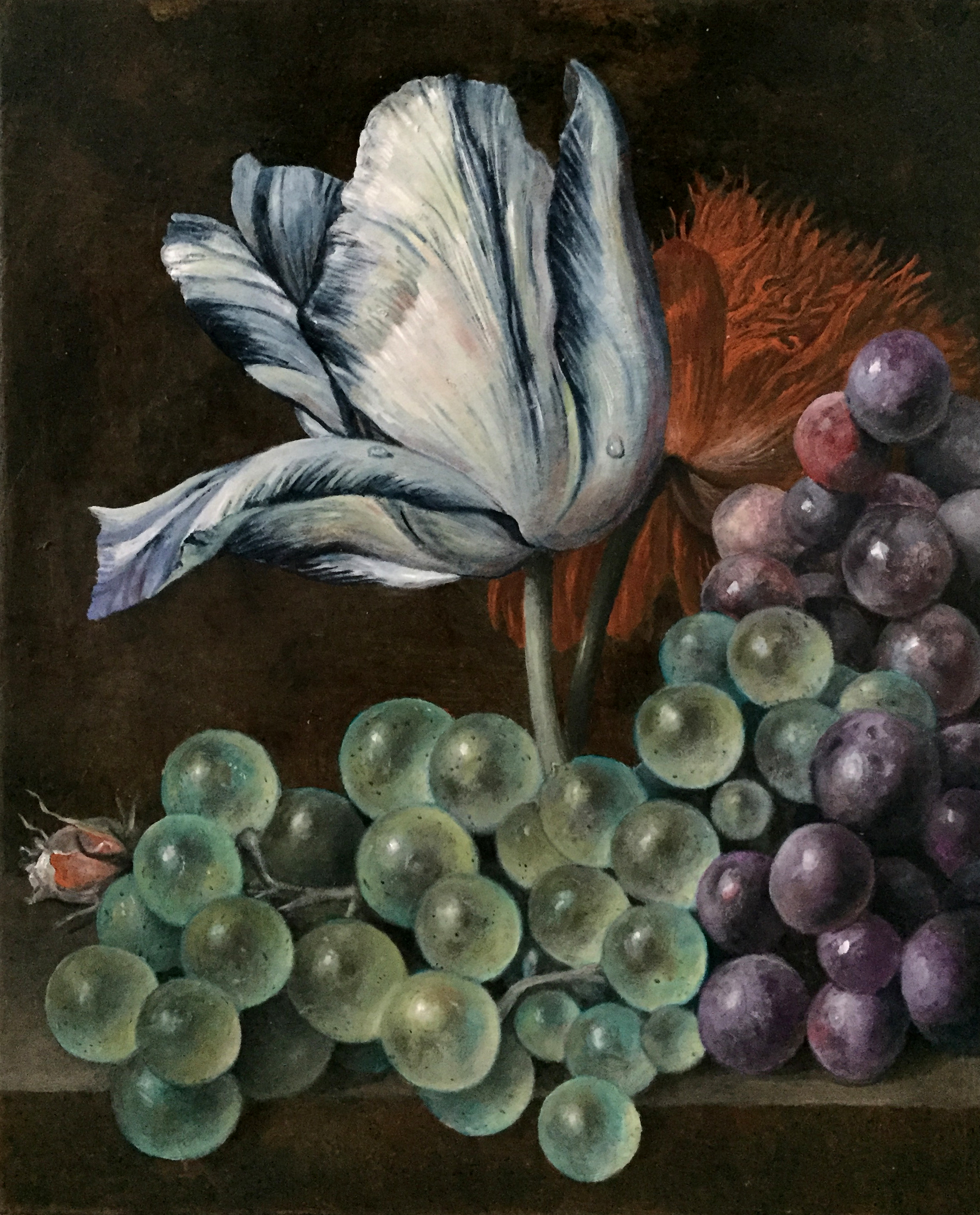 Grapes and Tulip