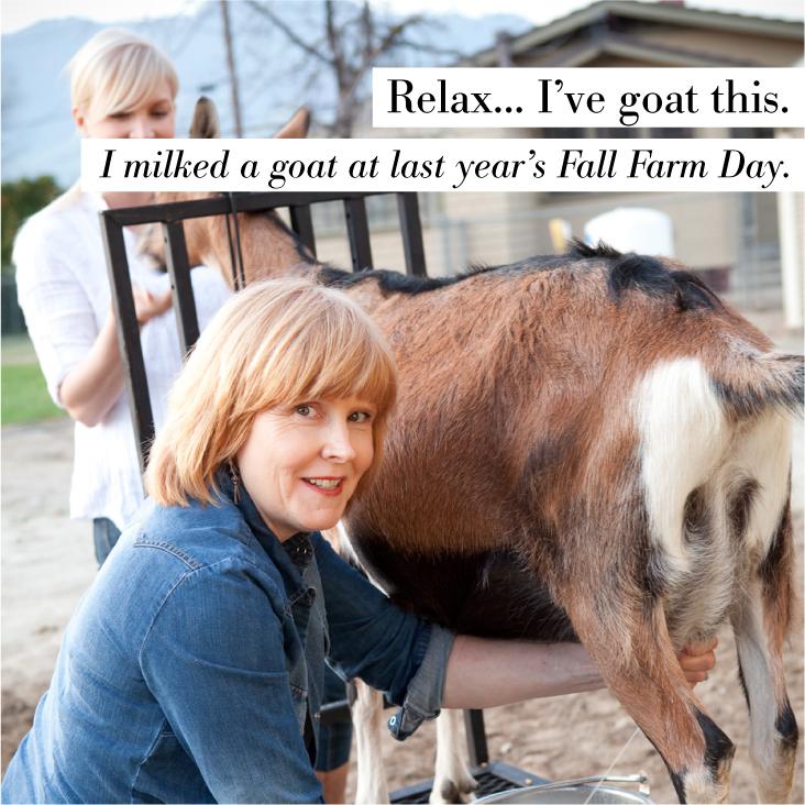 Chivas Fall Farm Day Social Media Image 3.jpg