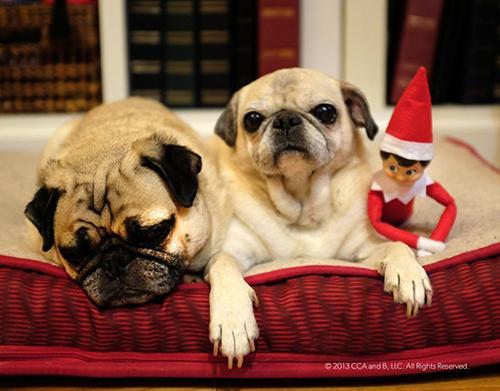 Derechos:  Elf on the shelf