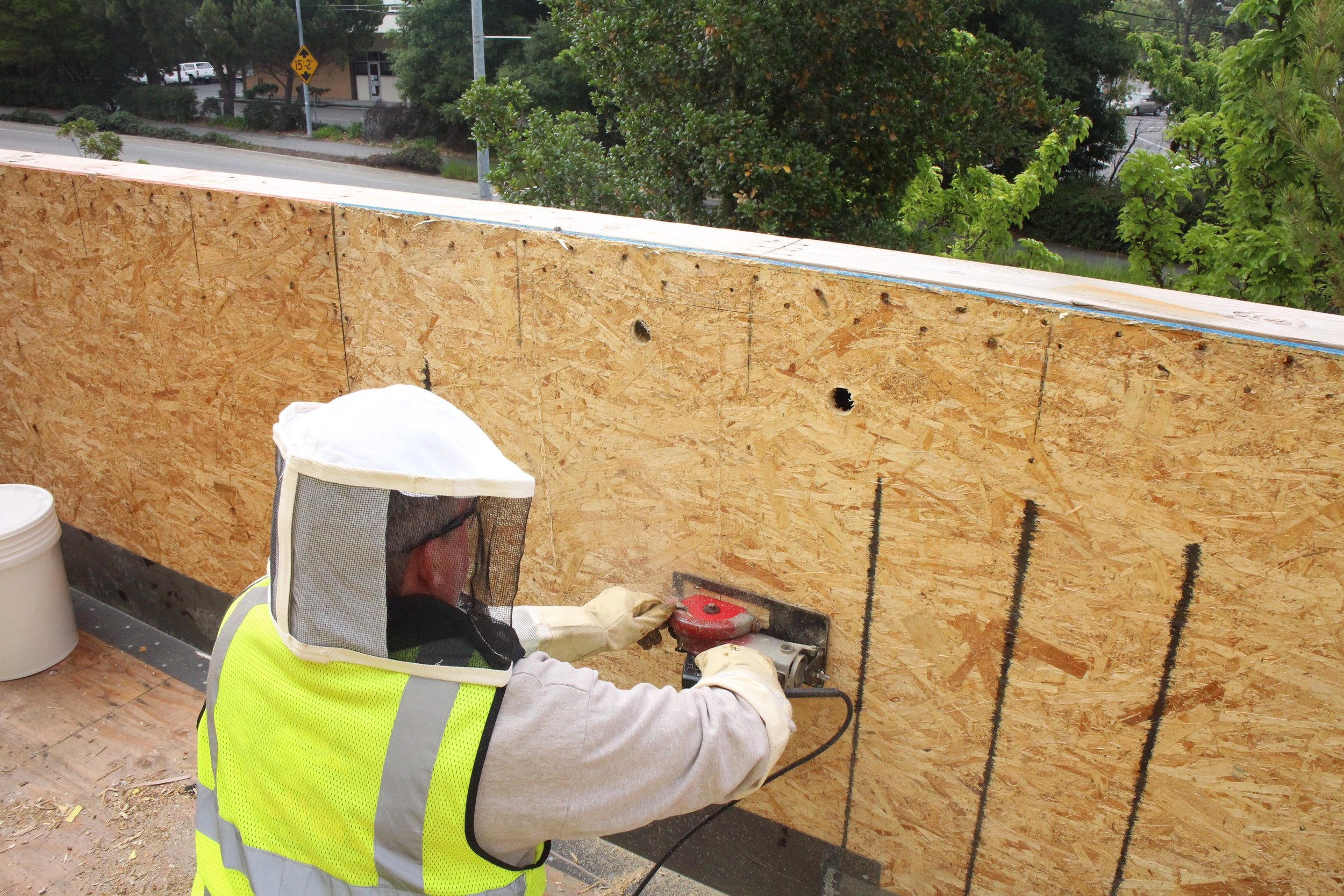 Joe is cutting open the panel to expose the hive. Notice the two bore holes to determine exact hive location.