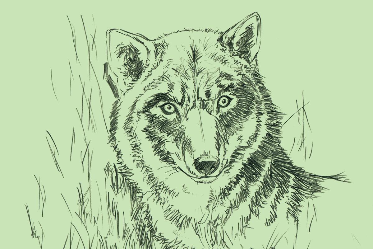 felipe_illustration_02.png