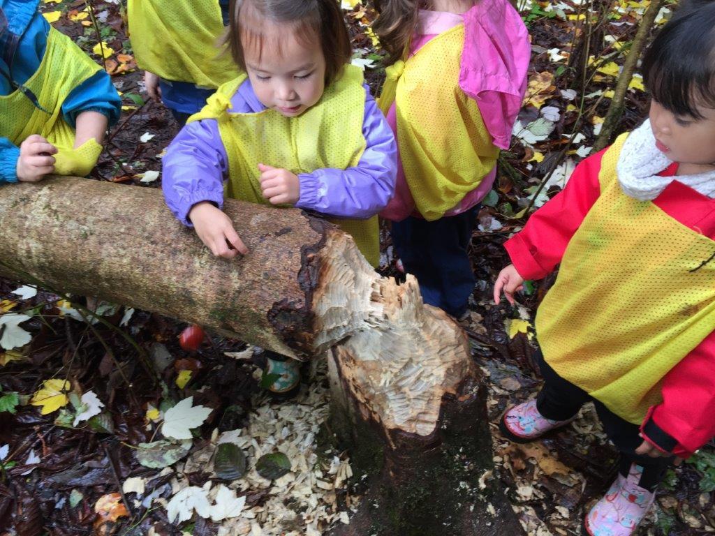 10 19 15 beaver tree.jpg