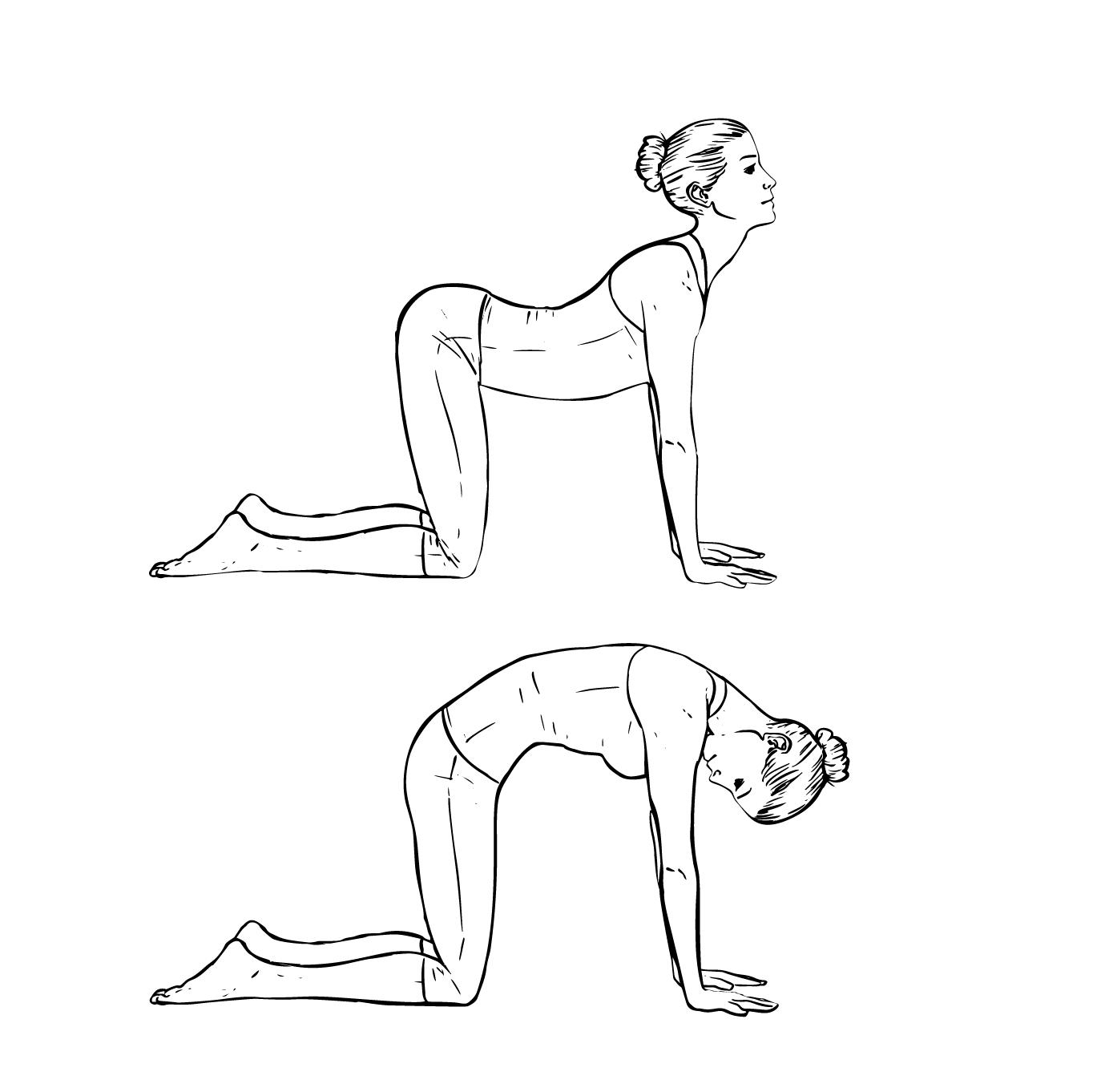 Cat Stretch.png