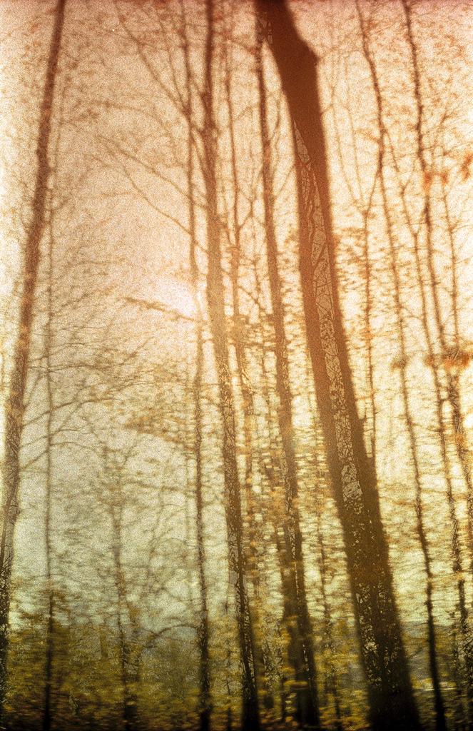 Mirjam Hümmer – Tree Magic