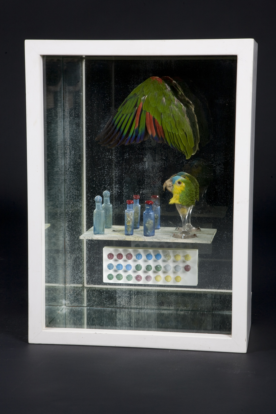 Parrot wing taxidermy