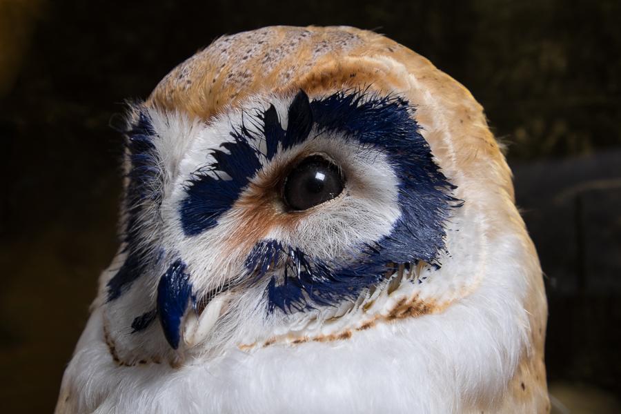 Owl 12.jpg