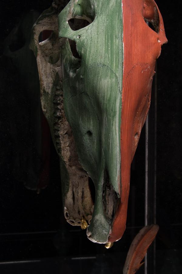 Crazy Horse skull nose.jpg
