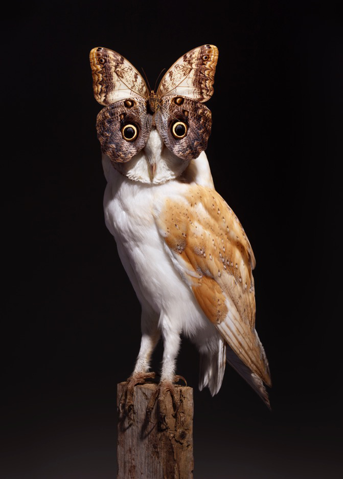 owlBUTTERfly2-2.jpg