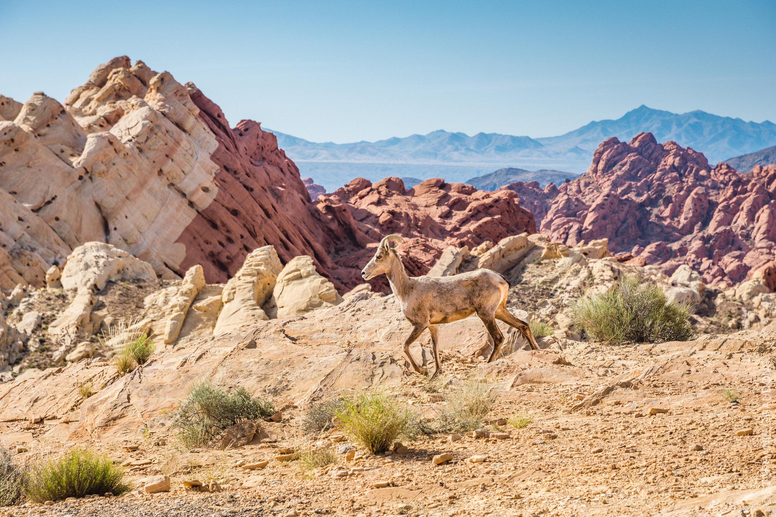 Valley-of-Fire-Nevada-6310.jpg