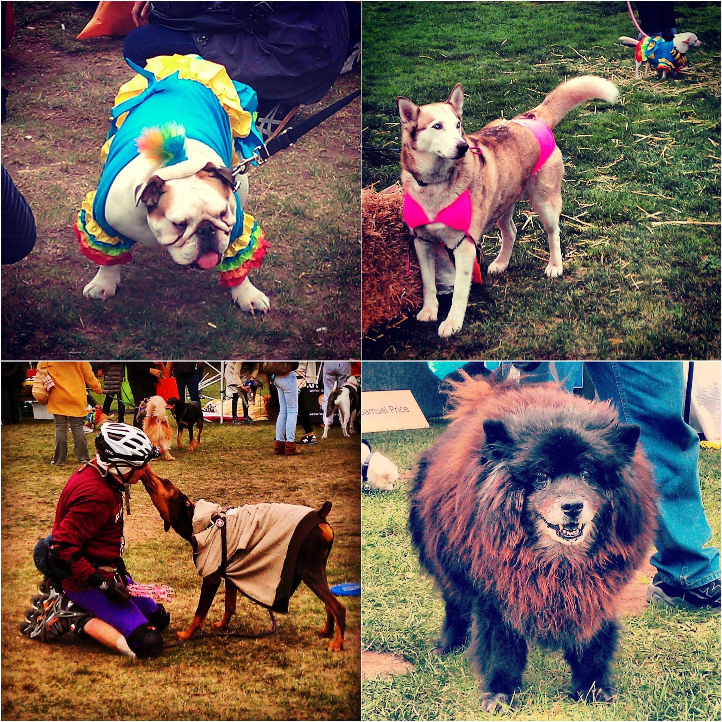 Pet_Pride_Collage