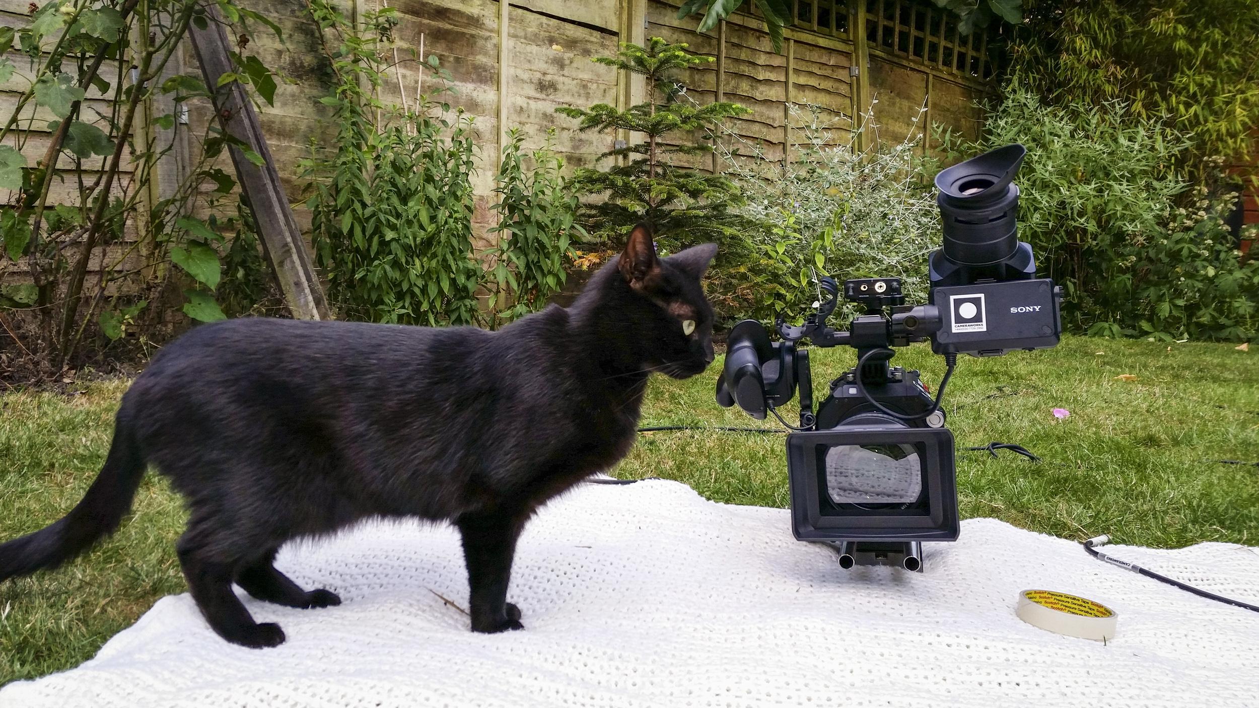 Cameracat.jpg