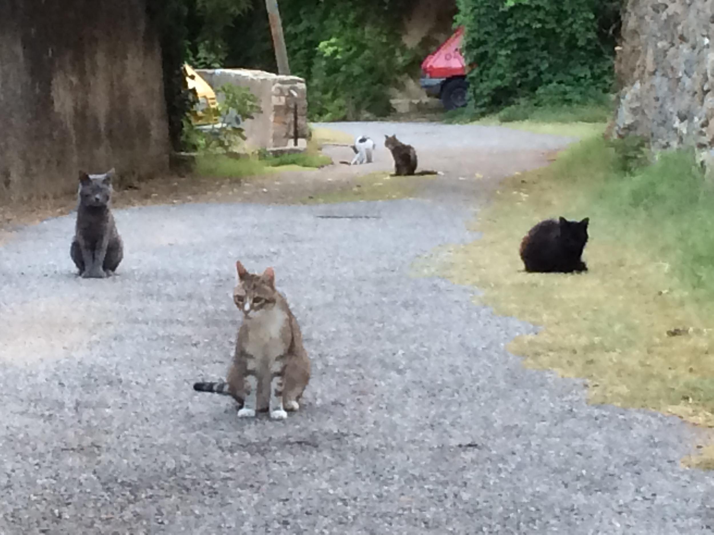The Cats of Cotignac
