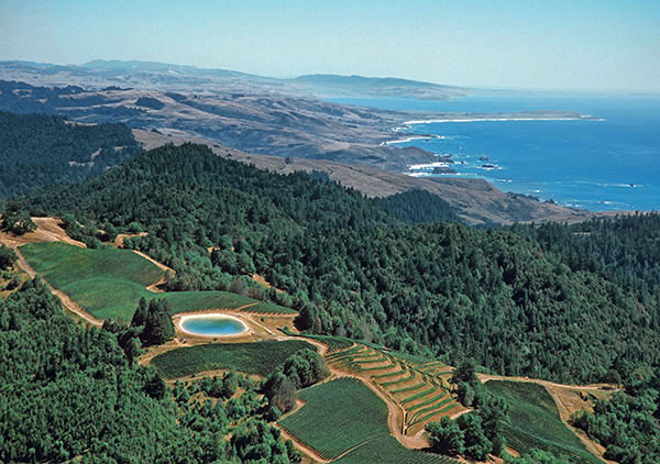 Fort_Ross_Vineyard_Aerial.jpg