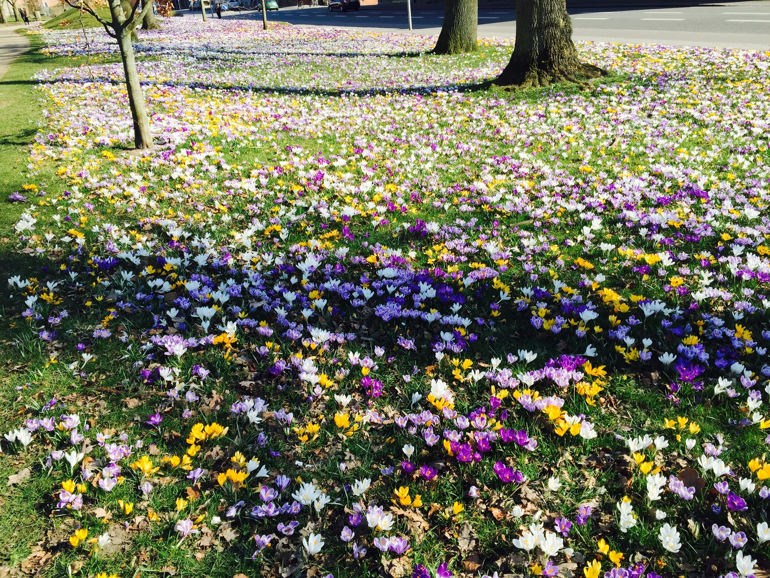 Beauty_And_nature_spring_flowers_1.jpg