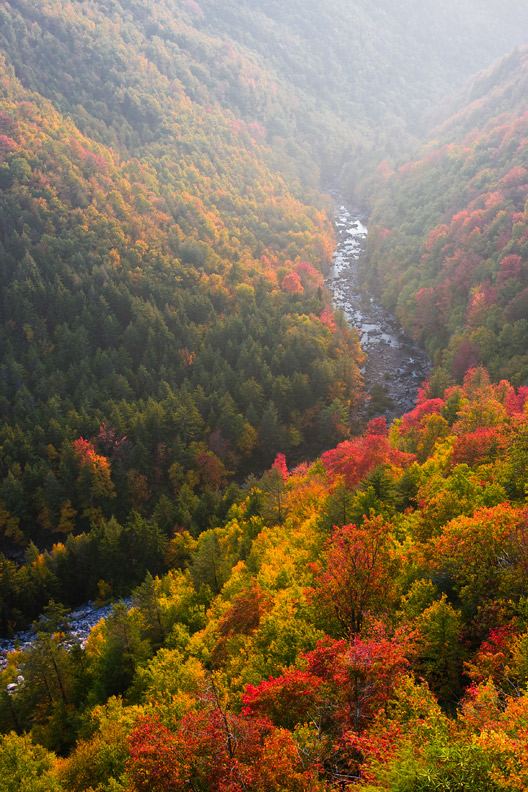 """Golden Canyon"" - A golden backlit canyon during a warm autumn afternoon. Blackwater Falls State Park, West Virginia."