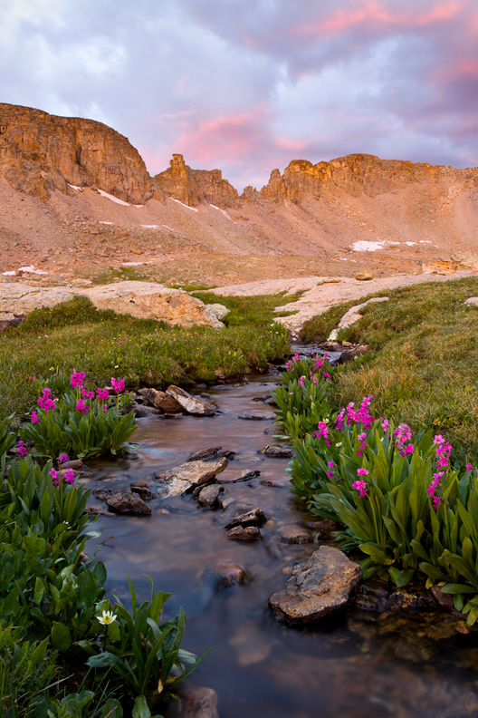 """Paradise"" - A perfect small stream lined with flowers during sunrise high in the San Juan mountains, Colorado."