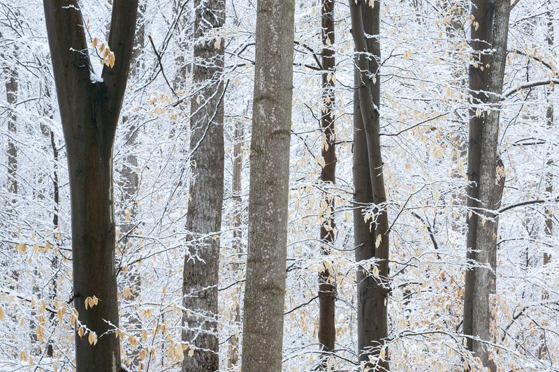 Scott's Run Nature Preserve in Snow, Virginia, United States.