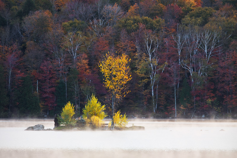 Backlit Island of Color, Kent Pond, Green Mountain National Forest, Vermont