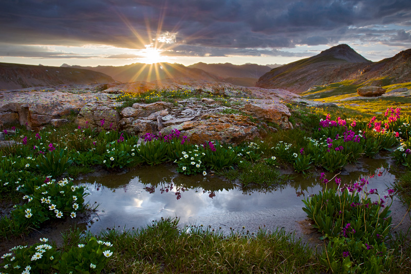 Wildflower Sunrise, Porphyry Basin, Colorado, United States.