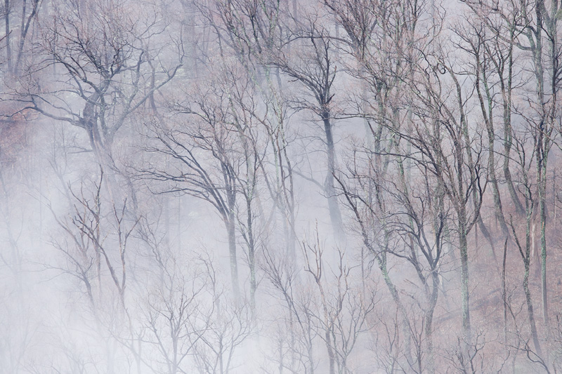 Foggy Forest, Shenandoah National Park, Virginia, United States.