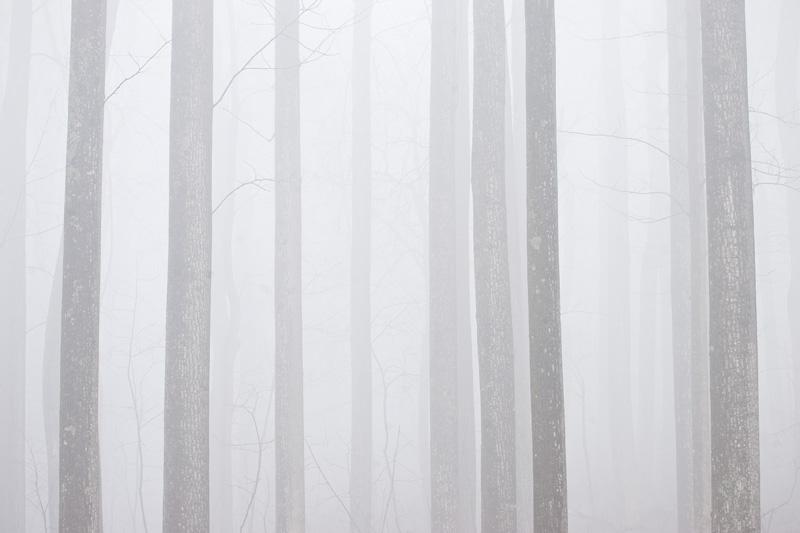 Foggy Forest in Shenandoah National Park, Virginia, United States.
