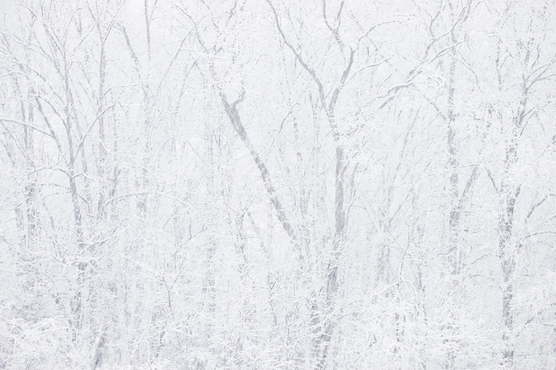 Manassas Battlefield National Park, Virginia During Heavy Snowfall in the Winter.