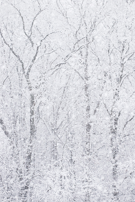 """The Storm"" - Winter Forest in Heavy Snowfall, Manassas Battlefield, Manassas, Virginia"