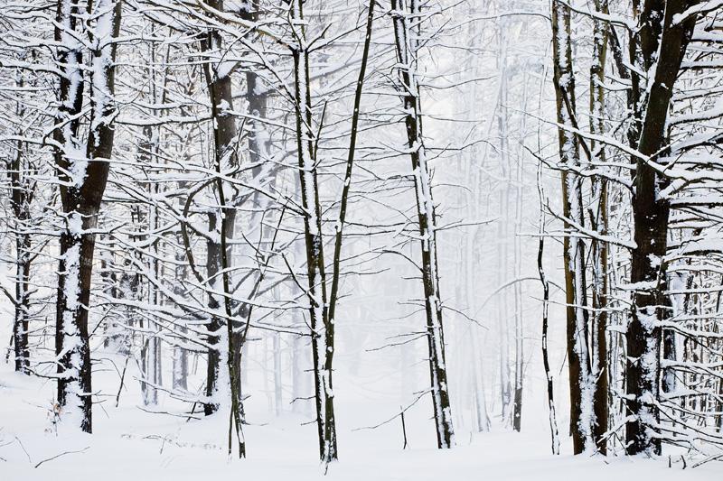 Winter Forest, Bernhard's Bay, New York