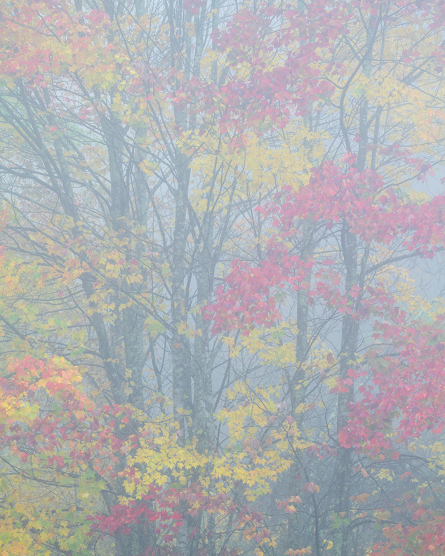 """Released, Again"" - Foggy foliage near the edge of a pond, New River Gorge, West Virginia."